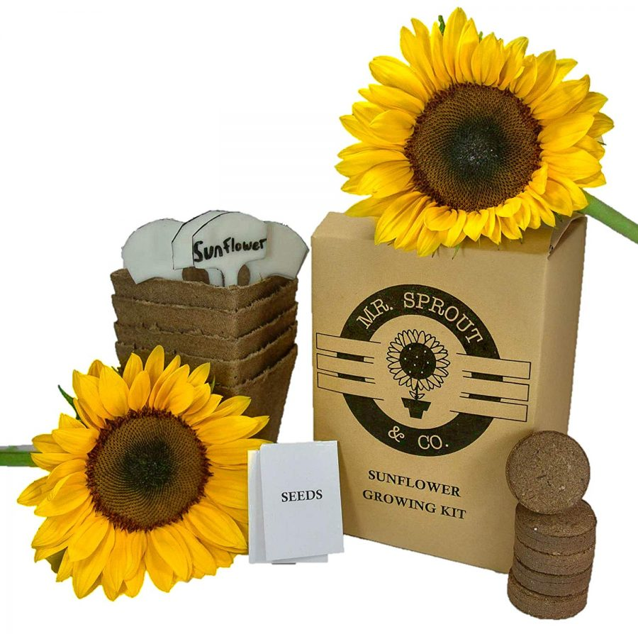 16 Mr. Sprout Organic Sunflower Starter Kit